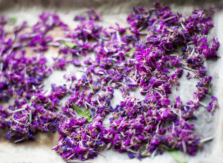 dripping pan: herbal tea from fireweed. technology making herbal tea from fireweed