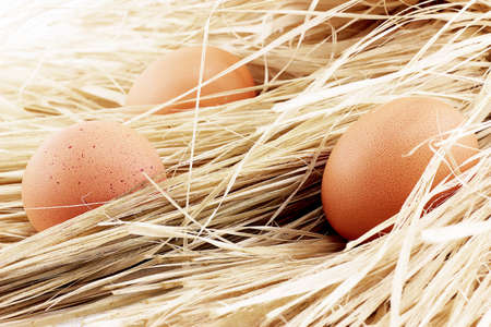 brown eggs: brown eggs in the straw. few raw chicken brown eggs among hay, close-up Stock Photo