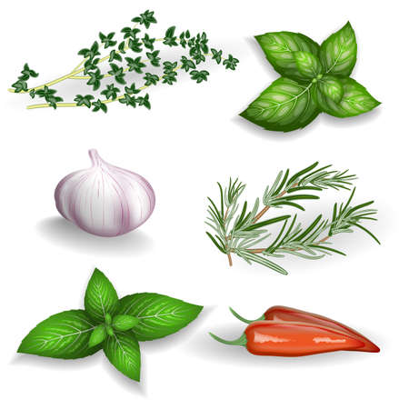Set of fresh herbs, seasonings and spices on a white background.  For use as logos on cards, in printing, posters, invitations, web design and other purposes.