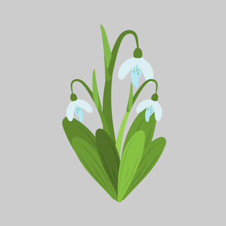 Spring flowers. Snowdrops vector sketch. For use as logos on cards, in printing, posters, invitations, web design and other purposes. Stock Vector - 77059207