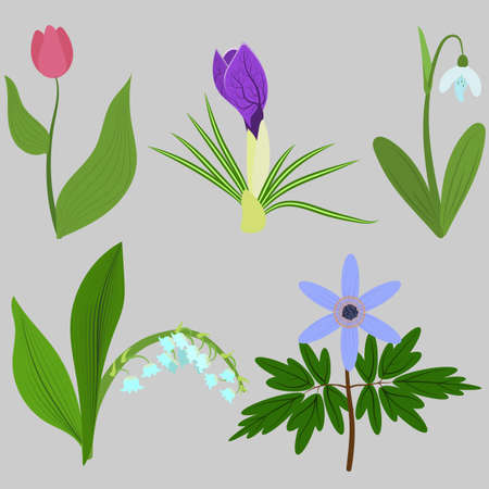 Set spring flowers. Tulips, crocuses, snowdrops, lilies, anemones. For use as logos on cards, in printing, posters, invitations, web design and other purposes.