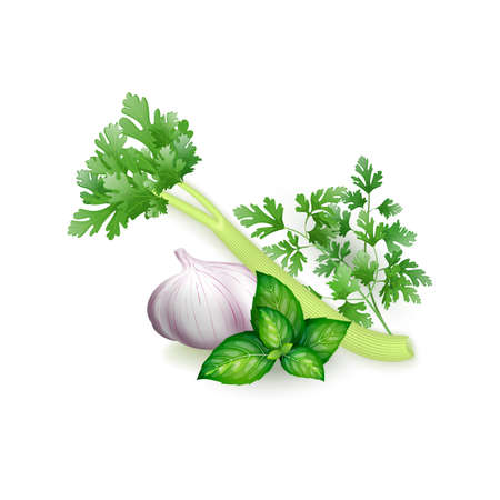 Set of parsley, basil, celery and garlic in realistic style, isolated on white background Vetores