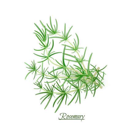 Sprigs of fresh delicious Rosemary in realistic style, isolated on white background Ilustracje wektorowe