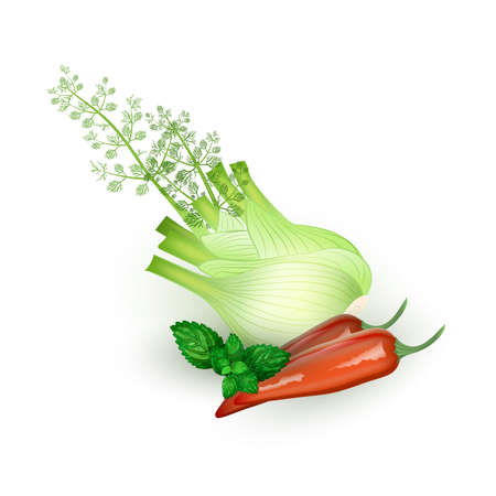 Set of Mint, pepper and fennel in realistic style Illustration