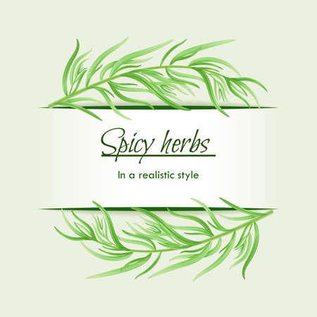 Pikantne zioła w realistycznym stylu, ramki na tle