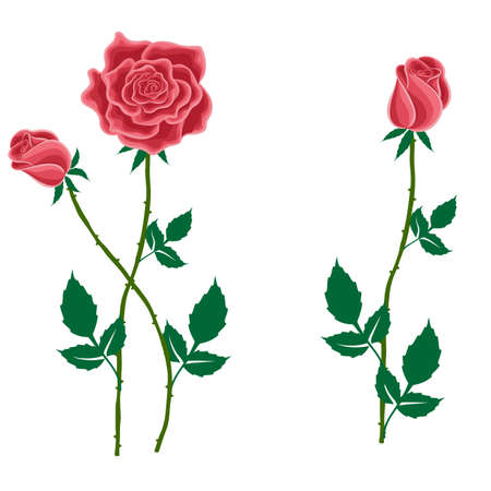 lay: Flower of a red rose with buds in cartoon style for used for wallpaper; printing on the packaging paper; textiles.