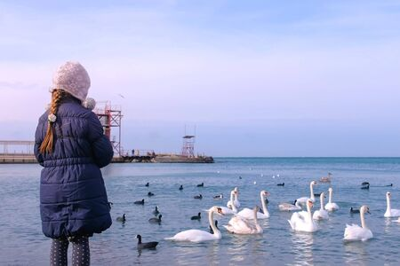 Child girl is feeding flock of white swans swimming on sea, seaside in winter, back view. Swans, ducks and small black birds floating in sea water with small waves.