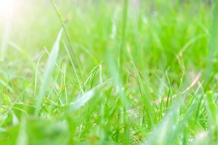 Blur background with green grass on meadow swaying on the wind in wild nature. Glade with green plants in forest in spring summer time.