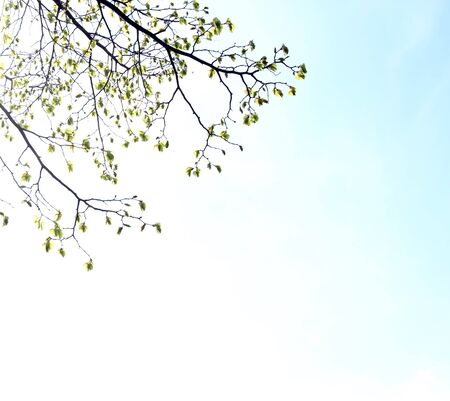 Tree branch with green leaves on blue sky background