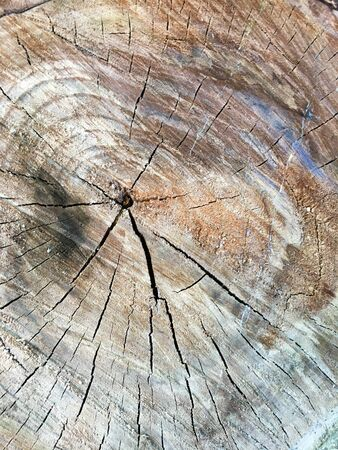 The ring of the tree. Wood texture. Top view. Close-up. Natural background.