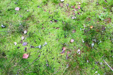 On green moss are autumn leaves. Forest background. Autumn landscape. 写真素材
