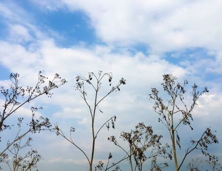 Tall dry grass against the blue sky. Autumn atmospheric background.