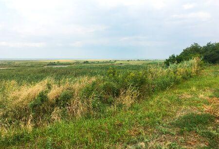 Autumn field of green and yellow grass. Autumn landscape.