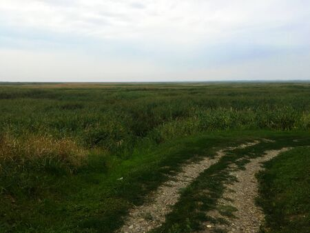 Road through the field. Landscape of green and yellow grass. Russian nature.