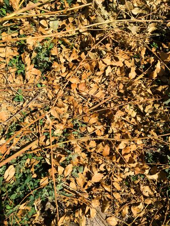 Dry yellow leaves lie on the ground in the sun. Natural autumn background. Stok Fotoğraf