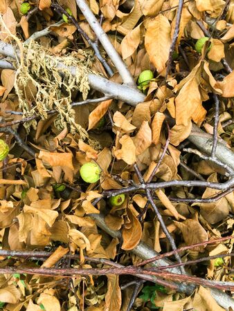 A tree branch with dry yellow leaves lies on the ground. Autumn background. Imagens