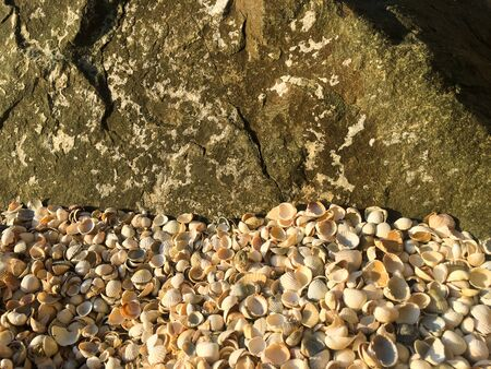 Sand from seashells. Background of shells. Texture for design. 写真素材