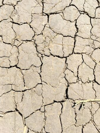Dry ground in the cracks. Global environmental issue. Drought. 写真素材