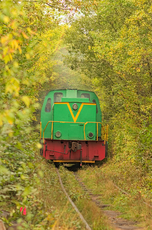 leisurely: Old locomotive leisurely rides along the narrow tunnel of trees. Tunnel of love - wonderful place created by nature.