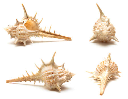 Set of seashell in four different views isolated on white close up photo