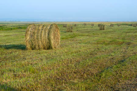 haying, harvesting, lots of haystack in the fields on a Sunny day