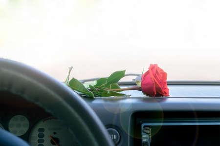 a red rose flower lies on the dashboard inside the car Stockfoto