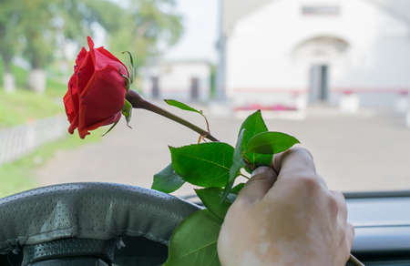 driver hand in the car behind the wheel holds a red rose flower 版權商用圖片 - 130789332