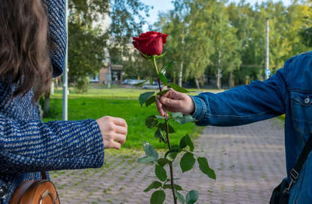 a man's hand gives the girl a red rose flower