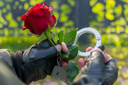 the hand of a man in handcuffs gives a red rose flower