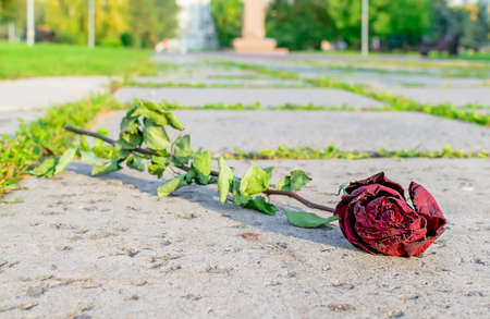 fallen dried red rose lying on the footpath