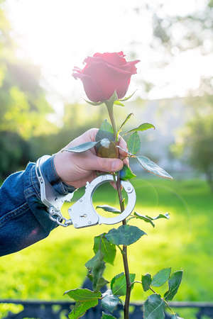 hand of a man in handcuffs gives a red rose flower