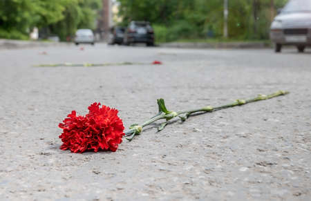 a red carnation flower is lying on the street on the asphalt of the road Stock fotó