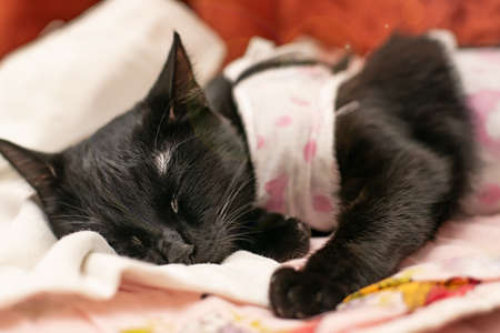 a sick black cat lies, sleeps and recovers on the sofa Standard-Bild