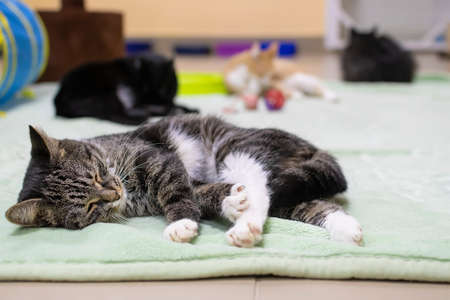 the cat, releasing its claws, sleeps and basks on the mat on the floor of the shelter among many other cats