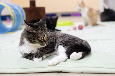 a young kitten lies on a mat on the floor among other cats and toys in a veterinary shelter Standard-Bild