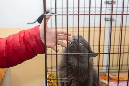 a gray cat bit the hand of a visitor to the shelter
