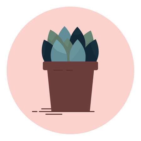An indoor flower in pot vector illustration. Home decorative plant, isolated element.