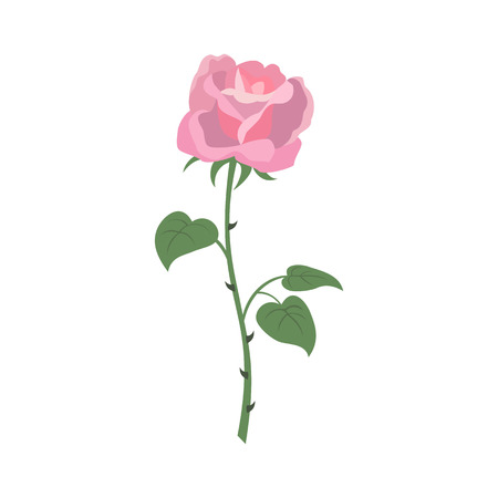 Rose icon on the white background for your design. Vector illustration.