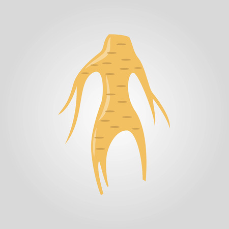 Ginseng icon on the white background.