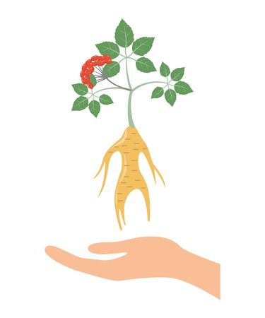 tincture: Ginseng icon on the white background. Vector illustration.