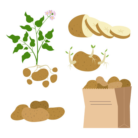 Icon set of potatoes on white background. Vector illustration.