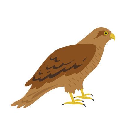 Cartoon hawk icon on white background. Vector illustration.