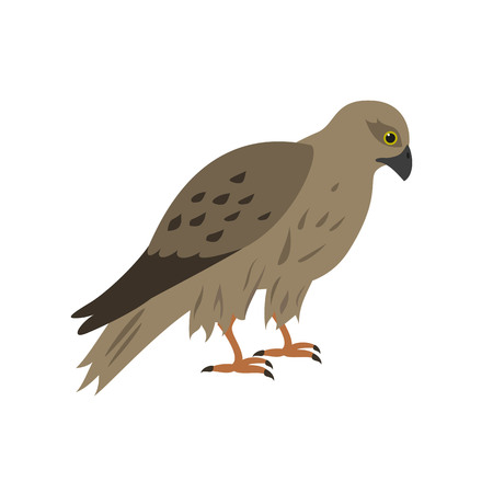Cartoon falcon icon on white background. Vector illustration. Illustration