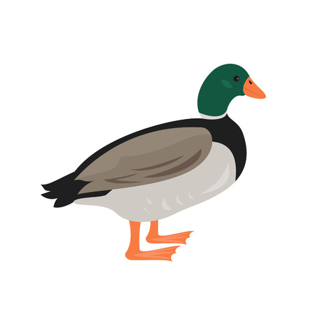 Cartoon duck icon on white background. Vector illustration.