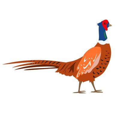 Cartoon pheasant icon on white background. Vector illustration.