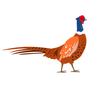 Cartoon pheasant icon on white background. Vector illustration.