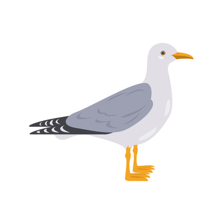 Cartoon seagull icon on white background. Vector illustration.