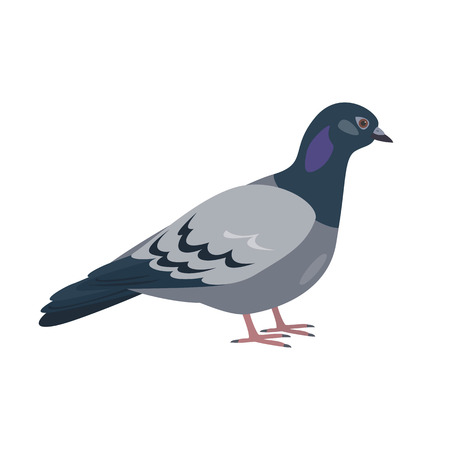 Cartoon pigeon icon on white background. Vector illustration.