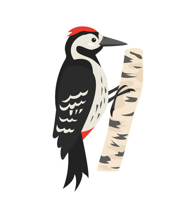 Cartoon woodpecker icon on white background. Vector illustration.