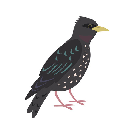 Cartoon starling icon on white background. Vector illustration. 向量圖像